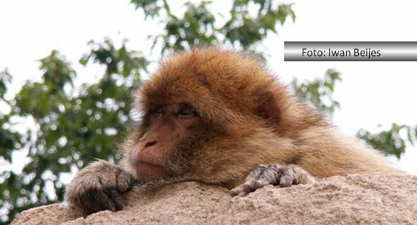 Fernando Albrecht conta a fabulinha do macaco e do elefante