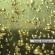 Imagem de bolhas de champanhe