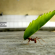 Fernado Albreccht conta a fabulinha da cigarra e da formiga
