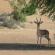 Fernando Albrecht conta a fabulinha do gnu e da gazela