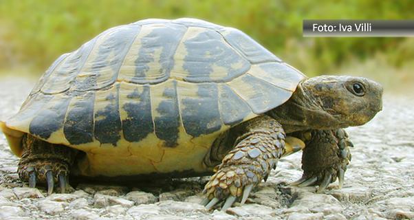 Fernando Albrecht conta a história da tartaruga e coelho no blog