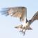 Imagem de uma águia em pleno voo