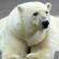 Fernando Albrecht conta o causo do homem que viu um urso polar no Alegrete