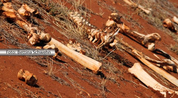 Campo de terra com vários ossos espalhados pelo tereno