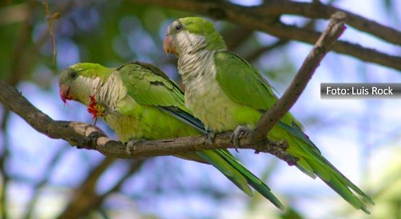 Duas caturritas em uma galho de árvore