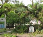 Temporal derruba centenas de árvores em Porto Alegre. Na imagem de João Mattos, parte de árvores impedem o trânsito nas vias da capital gaúcha