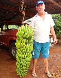 Agenor dos Santos (69 anos), residente na ERS 344, em Porto Mauá, fronteira com a Argentina, colheu um cacho de banana gigante, da variedade caturra, com tamanho de 1,3 metros, 51 kg e 510 frutas
