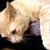 Imagem de gato grande deitado sobre um banco com a pata para baixo e olhos semicerrados.