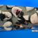 Pessoas dormindo em poltronas especiais em foto aérea
