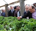 Governador José Ivo Sartori escolhe o moranguinho