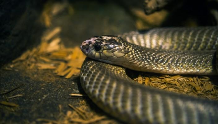 Tropical Snake Closeup