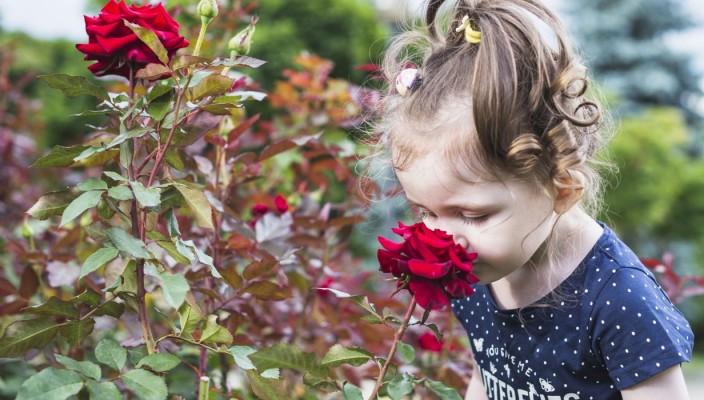 menina sente o cheiro de rosas