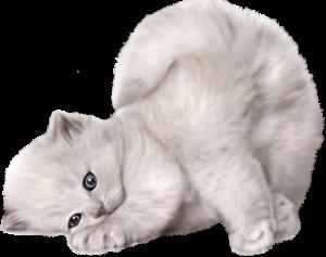gato gata gatos (161)