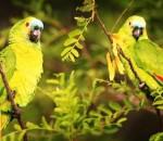papagaio-verdadeiro-cursos-cpt
